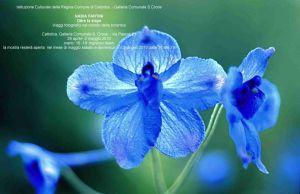 Oltre la siepe : viaggi fotografici nel mondo della botanica