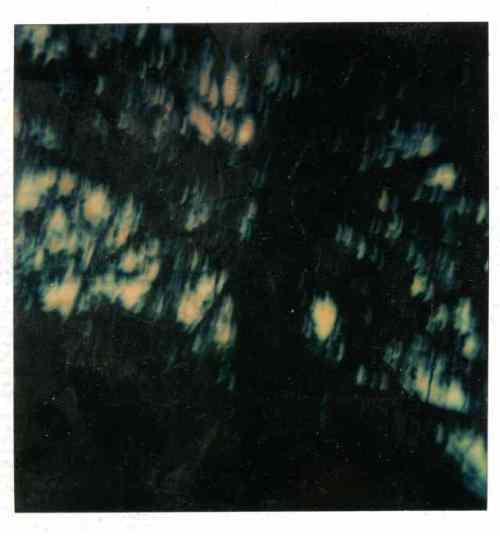polaroid005