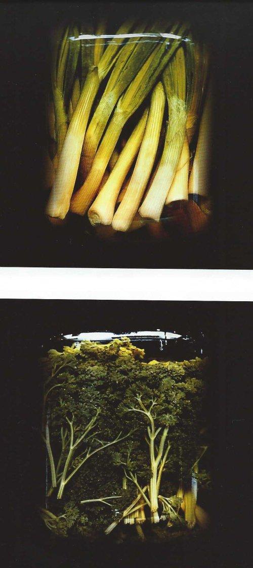 Natura in vitro di Migliori_02