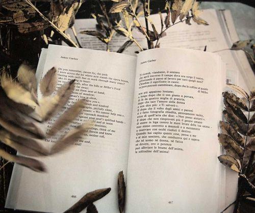 libri-dimenticati - foto di ENNIO BRILLI